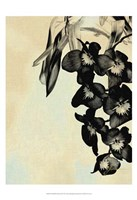"""Orchid Blush Panels II by James Burghardt - 13"""" x 19"""""""
