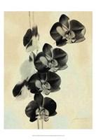 Orchid Blush Panels III Fine Art Print