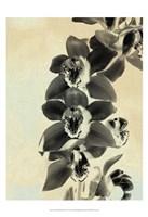"Orchid Blush Panels IV by James Burghardt - 13"" x 19"""