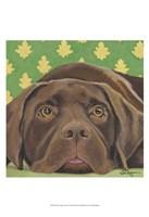 """Dlynn's Dogs - Casey by Dlynn Roll - 13"""" x 19"""""""