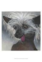 """Dlynn's Dogs - Poe by Dlynn Roll - 13"""" x 19"""""""