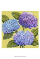 "Spring Hydrangeas I by Timothy O'Toole - 13"" x 19"""