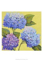 "Spring Hydrangeas II by Timothy O'Toole - 13"" x 19"""