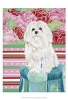 Della Rose Maltese Fine Art Print