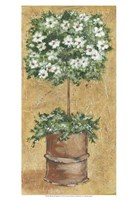 "Weathered Topiaries II by Carolee Vitaletti - 13"" x 19"" - $12.99"