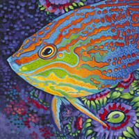 Brilliant Tropical Fish I Fine Art Print