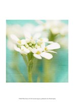White Flowers I Fine Art Print