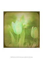 White Flowers VIII Fine Art Print