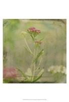 Filtered Dreams VI Fine Art Print