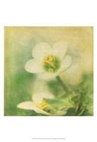 Filtered Dreams IX Fine Art Print