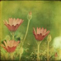 Dream in Pink IX Fine Art Print
