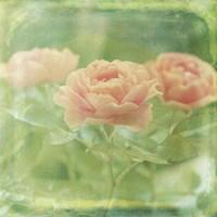 Dream in Pink X Fine Art Print