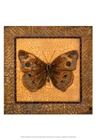 Crackled Butterfly - Buckeye Fine Art Print