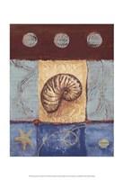 "Aquamarine Nautilus by Wendy Russell - 13"" x 19"""