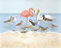 Seabird Summit Fine Art Print