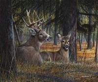"""10"""" x 8"""" Deer Pictures"""