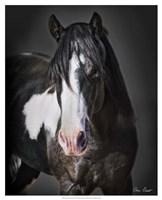 Horse Portrait II Fine Art Print
