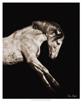 "Horse Portrait IV by David Drost - 17"" x 21"""