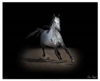 Horse Portrait IX Fine Art Print