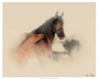 Horse Portrait X Fine Art Print