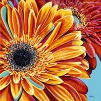 Color Bursts II Fine Art Print