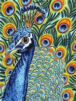 Plumed Peacock I Fine Art Print