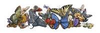 Wings of Splendor I Framed Print