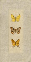 Butterfly Trio I Fine Art Print