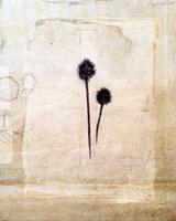 Herbarium IV by Ingrid Blixt - various sizes