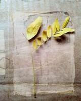 Herbarium V by Ingrid Blixt - various sizes