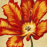 Parrot Tulip II by Timothy O'Toole - various sizes