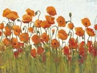 Rows of Poppies II Fine Art Print