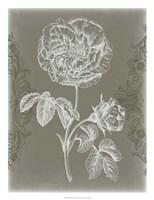 Floral Relief I Framed Print