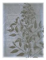 Fleur de Bleu I Framed Print