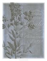 """Fleur de Bleu II by Jennifer Goldberger - 20"""" x 26"""" - $34.49"""