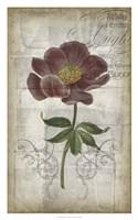 "French Floral I by Jennifer Goldberger - 20"" x 32"""