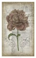 "French Floral IV by Jennifer Goldberger - 20"" x 32"""