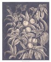 """Vintage Fruit & Floral II by Megan Meagher - 26"""" x 32"""""""