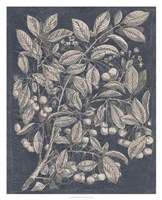 "Vintage Fruit & Floral III by Megan Meagher - 26"" x 32"""
