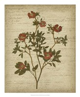 Romantic Pressed Flowers I Fine Art Print