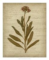 Romantic Pressed Flowers II Framed Print