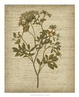 Romantic Pressed Flowers IV Fine Art Print