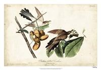 "Yellow-billed Cuckoo by John James Audubon - 26"" x 18"""