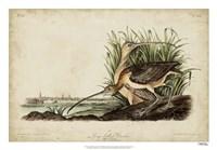 "Long-billed Curlew by John James Audubon - 26"" x 18"""