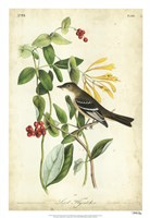 "Audubon Bird & Botanical II by John James Audubon - 18"" x 26"""