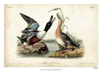 "Audubon Ducks I by John James Audubon - 26"" x 18"""
