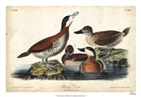 "Audubon Ducks II by John James Audubon - 26"" x 18"""