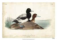 "Audubon Ducks III by John James Audubon - 26"" x 18"""