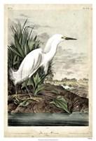 Snowy Heron Fine Art Print
