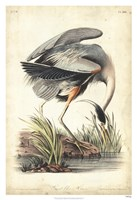 "Great Blue Heron by John James Audubon - 26"" x 38"", FulcrumGallery.com brand"